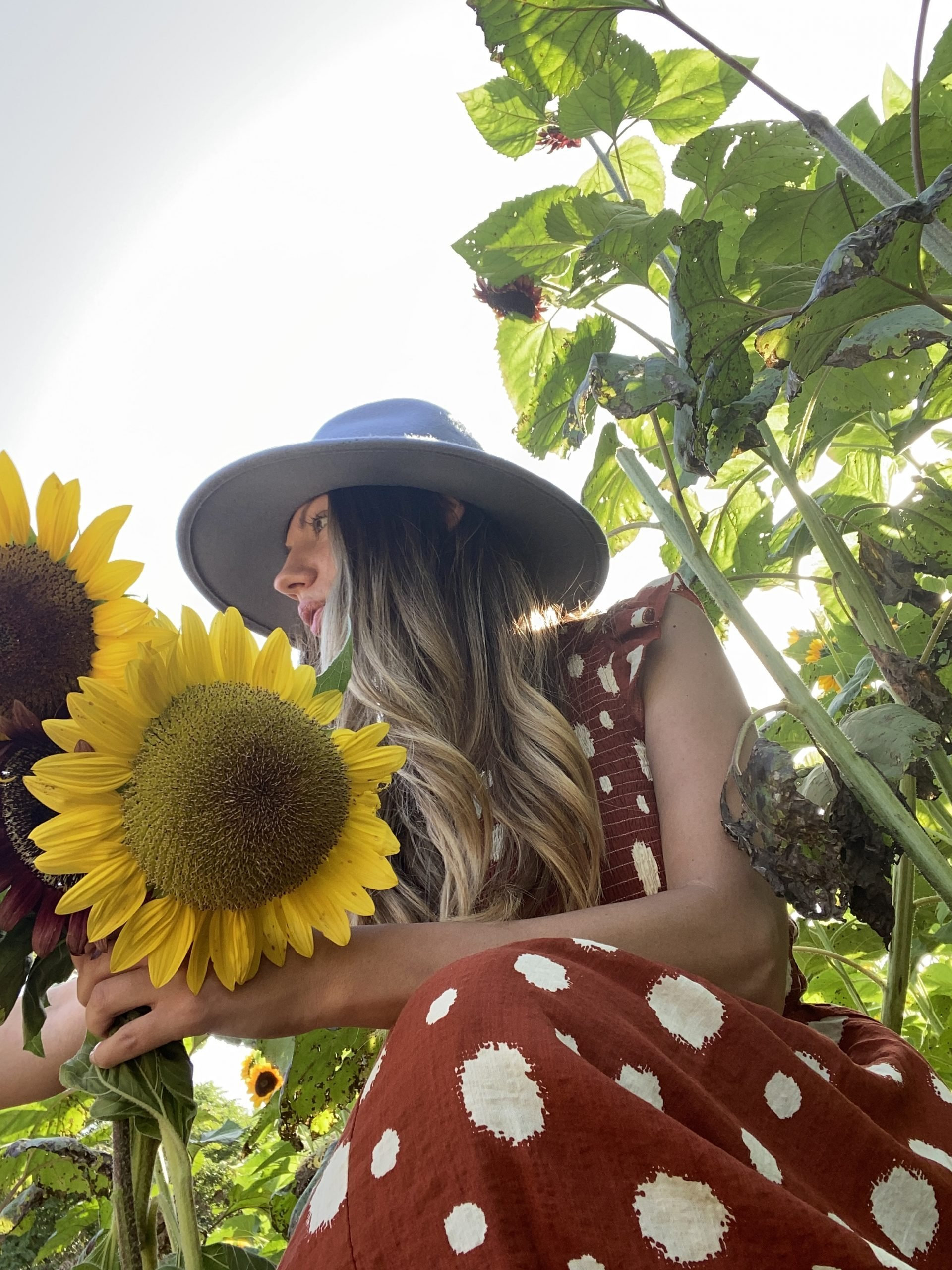 Lifestyle Blogger Chocolate & Lace shares her trip to Sunflower Fields near Philadelphia.