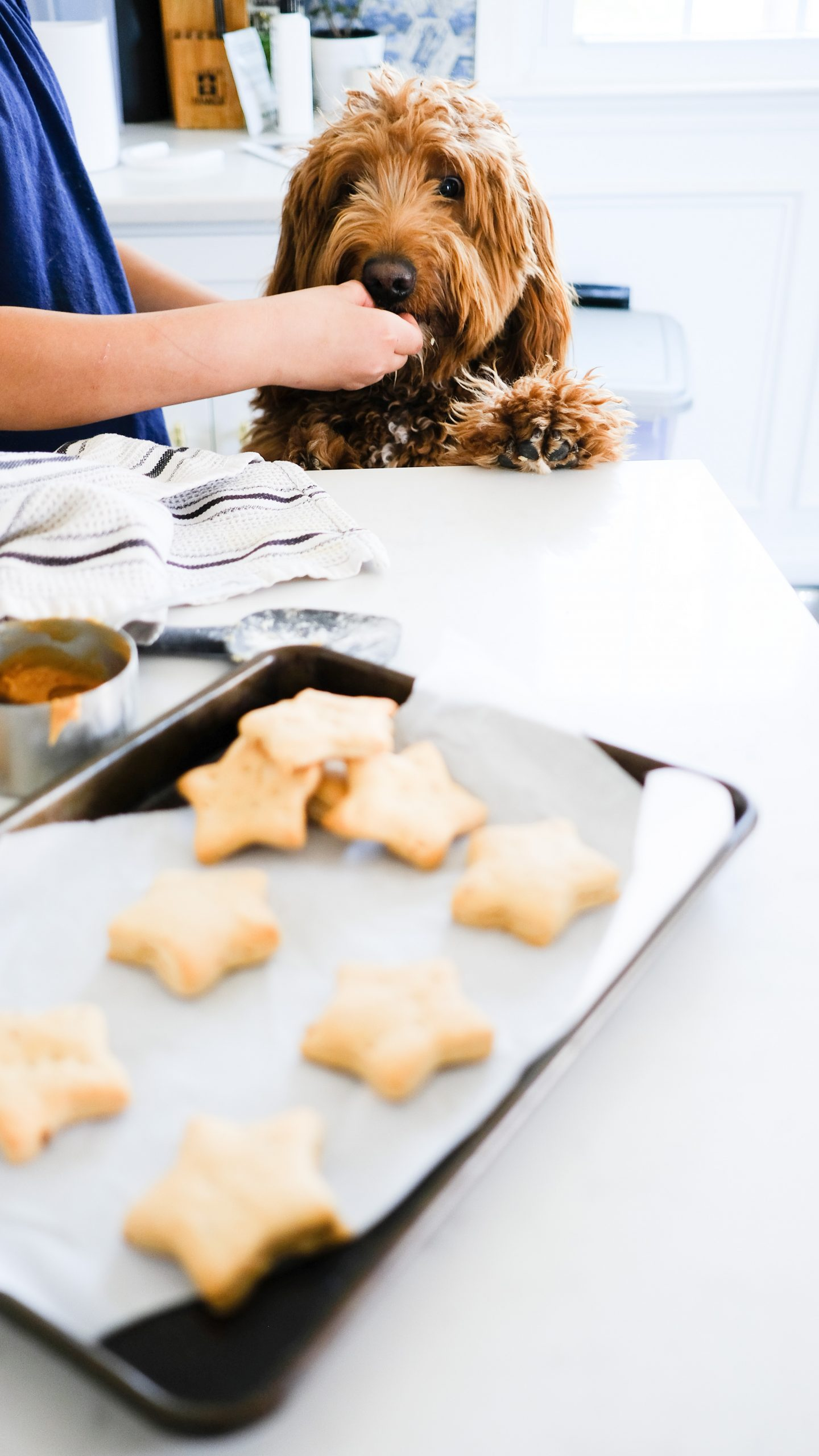 Chocolate and Lace shares her recipe for star shaped peanut butter dog stars