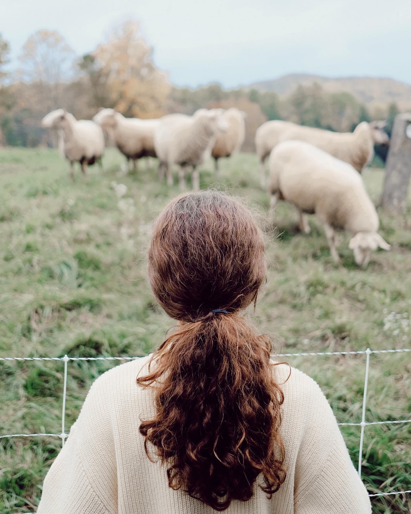 a girl with long brown curly hair facing a sheep pasture with white fluffy sheep