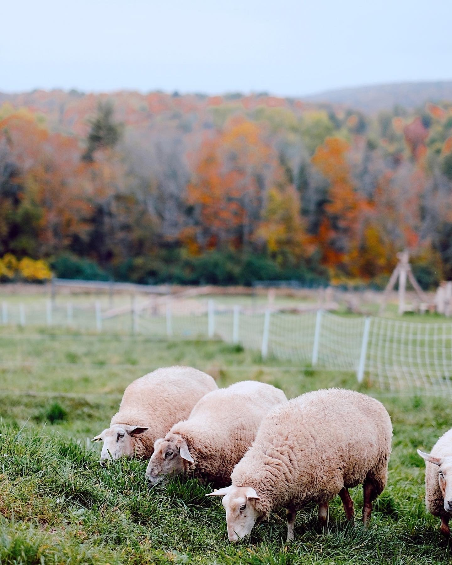 Our Stay at Fat Sheep Farm in Vermont